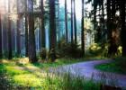 幽静的大自然